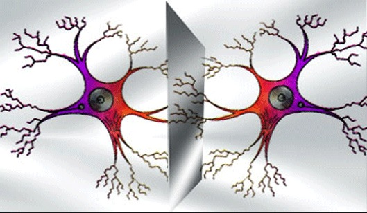 zerk-neirony